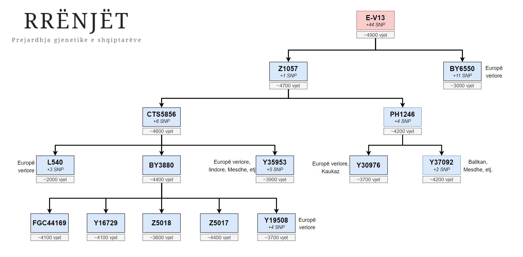 E-V13 dhe degëzimet kryesore