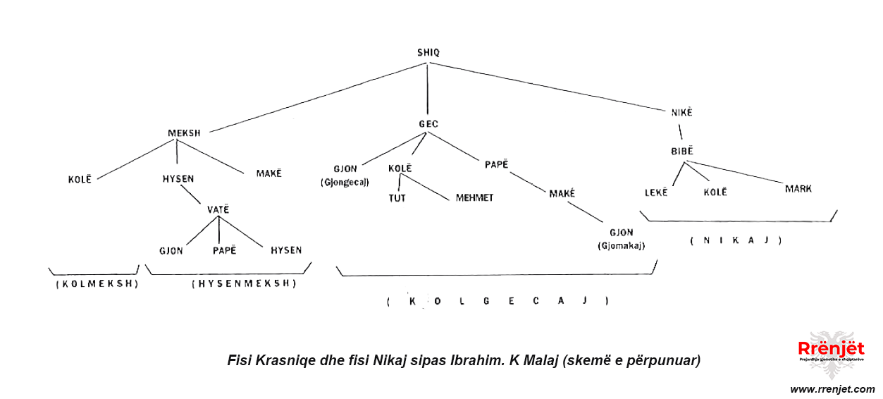 Fisi Krasniqe dhe fisi Nikaj (prejardhja)