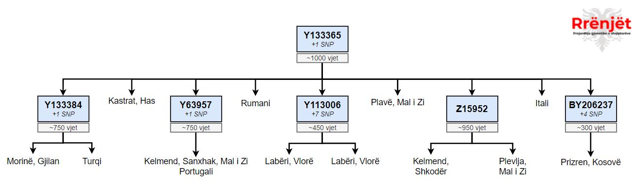 R-Y133365